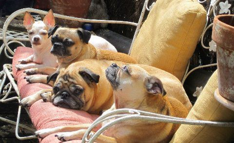 Jason Bergund's Dogs